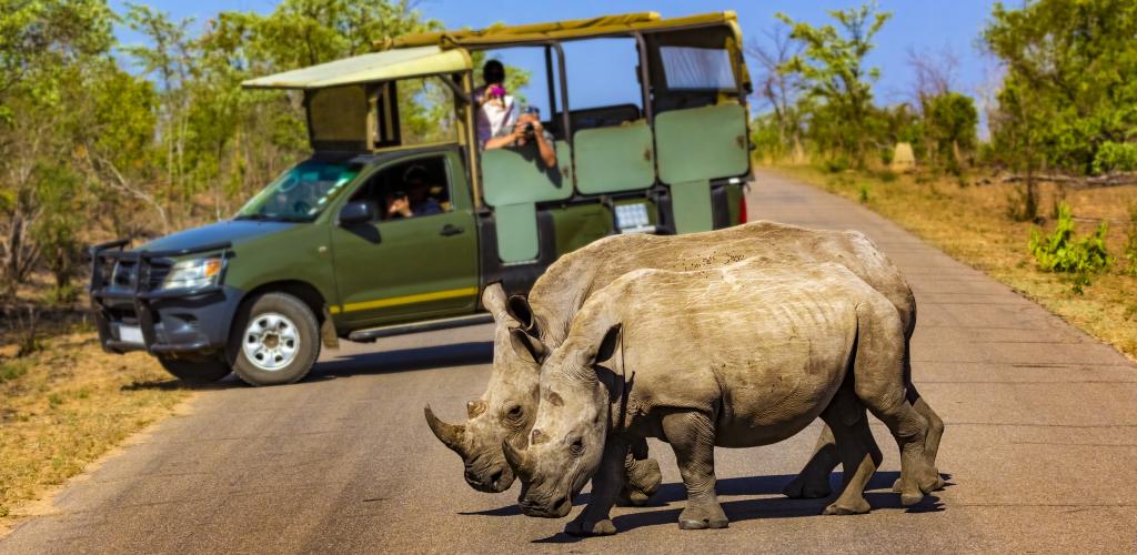 Game Drive Rhino